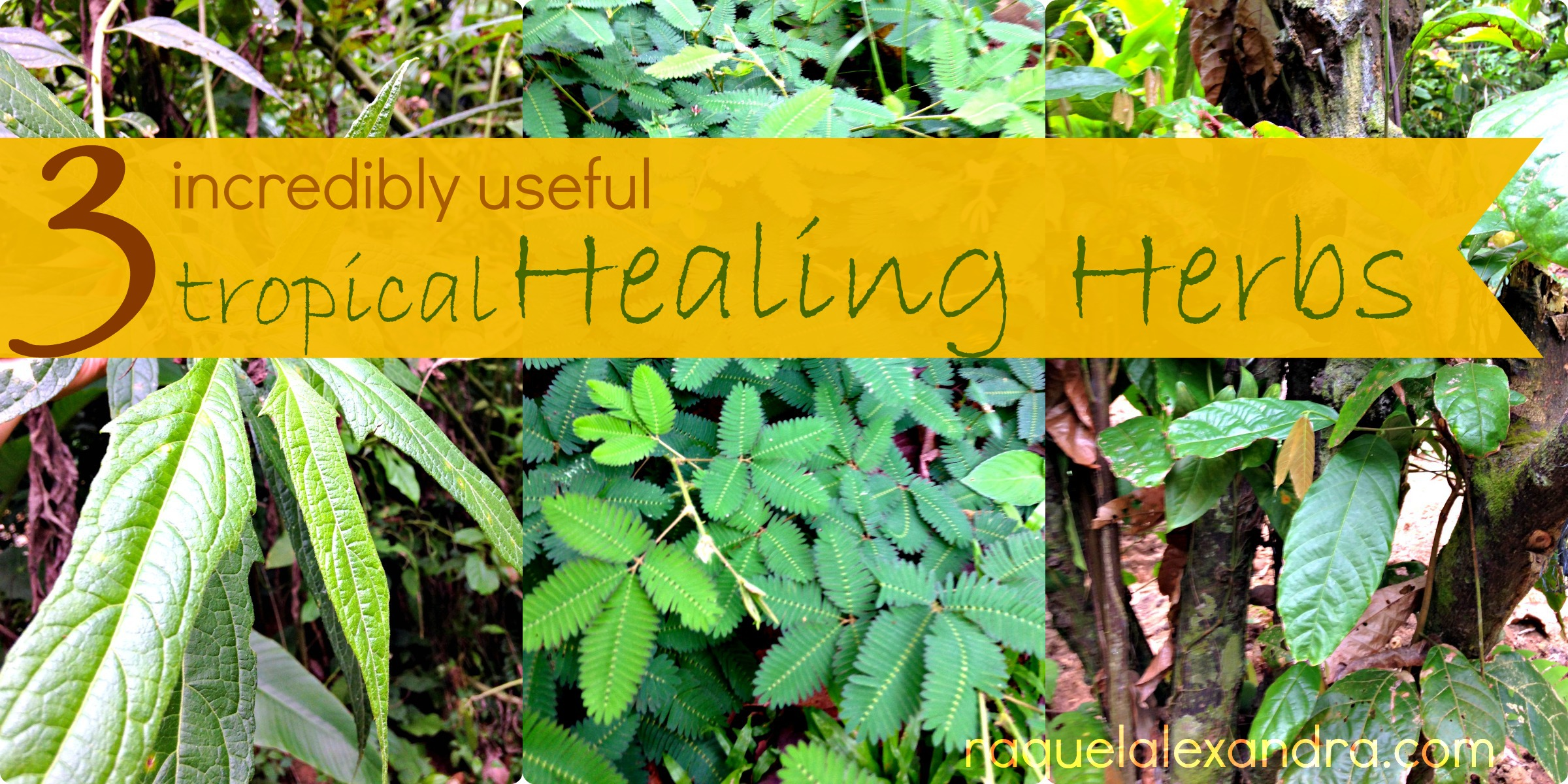 How are herbs useful? 14