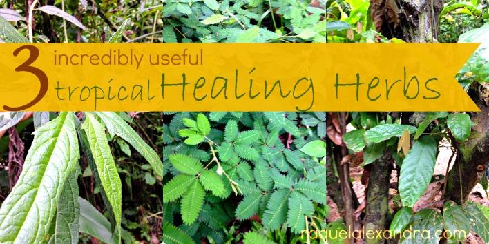 favorite herbs2.jpg.jpg